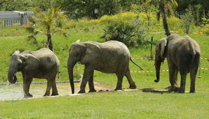 Zoo African safari de Plaisance-du-Touch