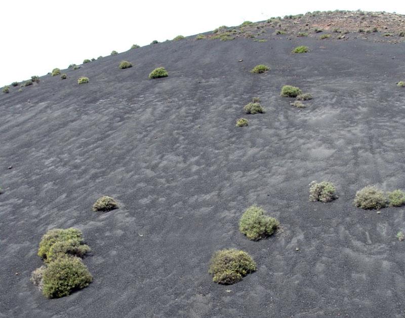 Le Terril du Mont de L'Ermite