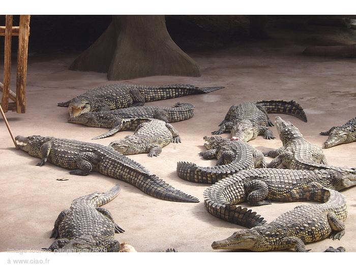 Alligator Bay - Reptilarium du Mont Saint-Michel