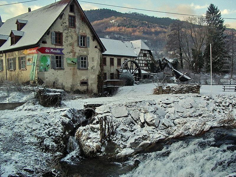 Vivarium du Moulin By Florival fr (Own work) CC BY-SA 3.0 via Wikimedia Commons