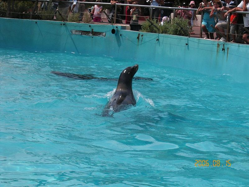 Marineland By Arnaud 25 & Jean Loup P (Own work) [Public domain], via Wikimedia Commons