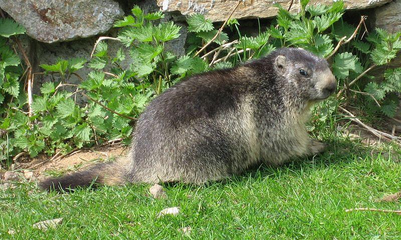 Parc animalier de Merlet Par Liné1 CC-BY-SA-3.0  CC BY-SA 2.5-2.0-1.0 via Wikimedia Commons