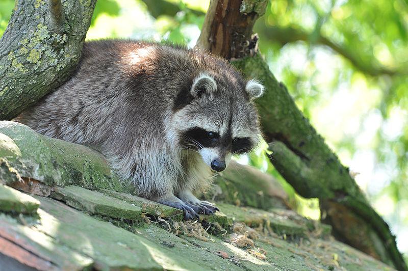 Parc Animalier de Sainte-Croix Par Demimieux Jean Michel (Travail personnel) CC BY-SA 3.0 via Wikimedia Commons