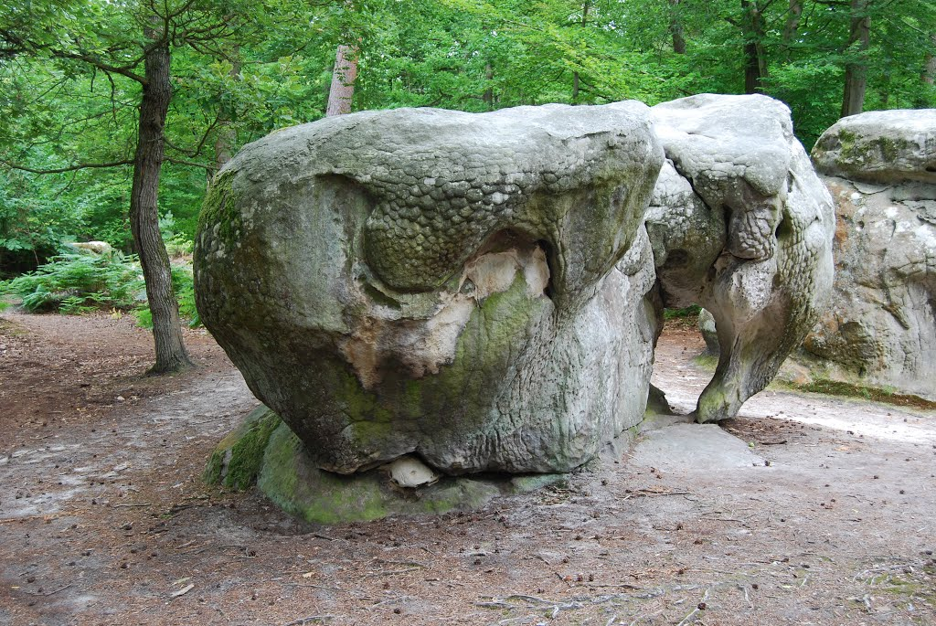 L'Elephant de Gorges d'Apremont
