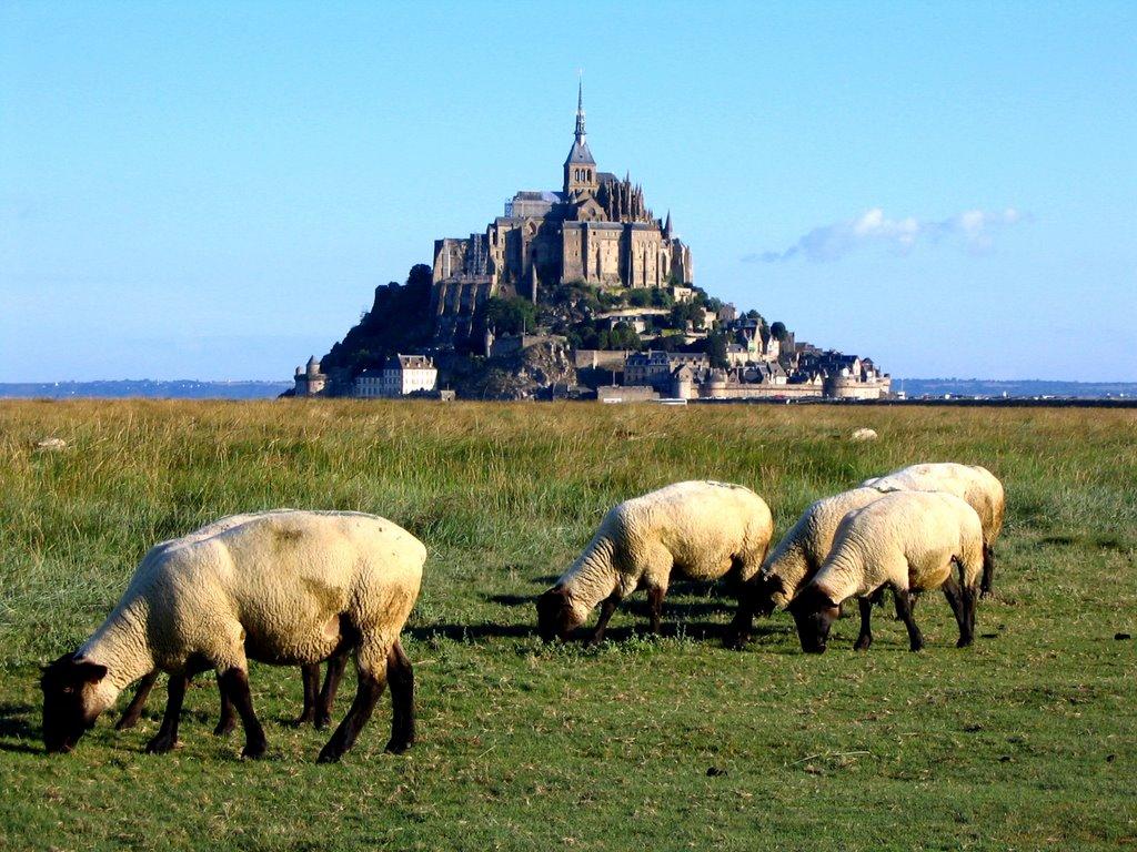 Prés salés du Mont-Saint-Michel