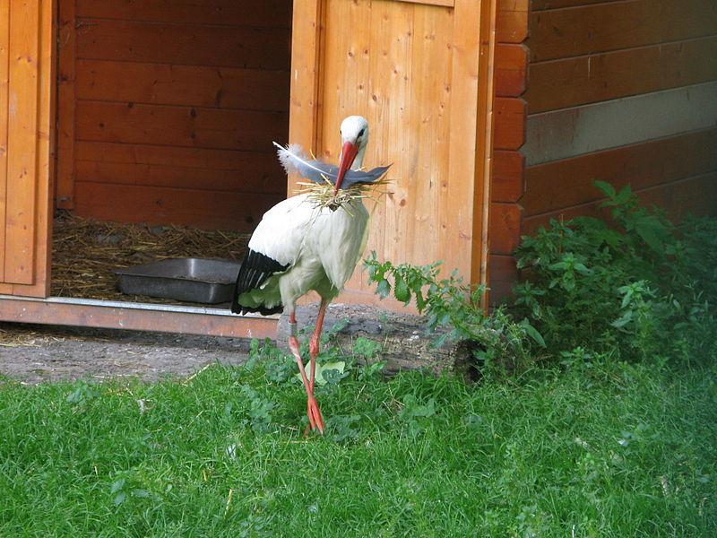 Zoo et parc de l'Orangerie By Jiel Beaumadier (Own work) CC BY-SA 4.0 via Wikimedia Commons