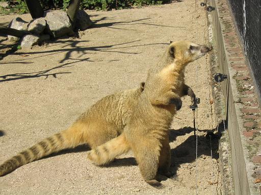 Parc Zoologique de Lille By Lrnt1 (Own work) GFDLCC BY-SA 4.0-3.0-2.5-2.0-1.0 via Wikimedia Commons