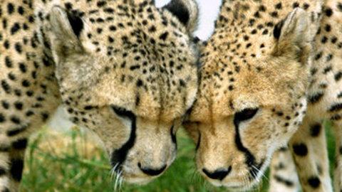 Zoo de Sanary