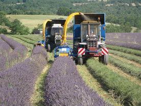 Distillerie Bleu Provence photo de distillerie-bleu-provence.com