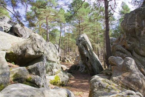 Fontainebleau. Site de la Dame Jouanne