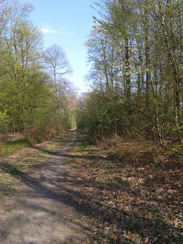 Forêt de Saint Germain en Laye By Serein CC BY-SA 3.0 via Wikimedia Commons