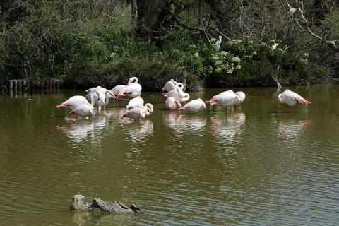 Parc ornithologique du pont de Gau By Isabelle Blanchemain CC BY 2.0 via Wikimedia Commons