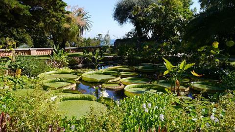 Jardin botanique exotique de Menton By Gossipguy CC BY-SA 4.0 via Wikimedia Commons