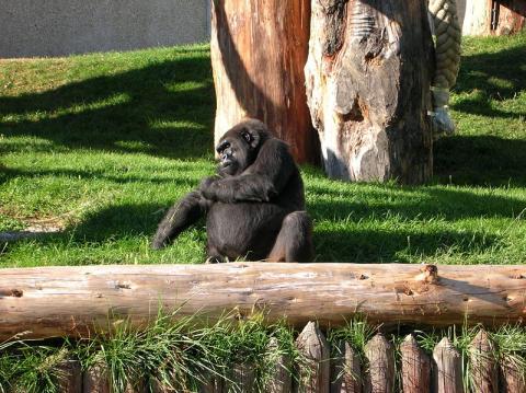 Parc zoologique de Saint-Martin-la-Plaine Par Laurent Fraquet (Travail personnel) [Public domain], via Wikimedia Commons