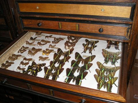 Musée des Papillons