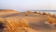 Les Dunes de l'Ile d'Oléron