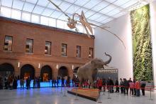 Museum d'Histoire Naturelle de Toulouse Par Samuelbausson CC BY-SA 3.0 via Wikimedia Commons