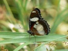 Le Tropique du Papillon en vidéo