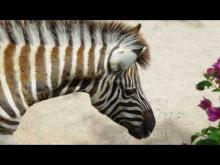 Parc zoologique du Cap Ferrat
