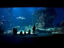 Aquarium Mare Nostrum en vidéo