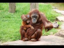 Espace zoologique de La Boissière-du-Doré en vidéo