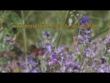 Le Jardin des Papillons en vidéo