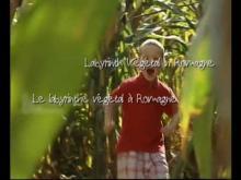 Labyrinthe Végétal de Romagne en vidéo