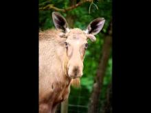 Parc animalier de Pradinas en vidéo