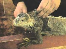 La Ferme des Reptiles en vidéo