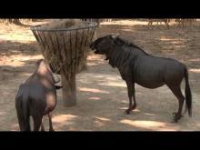Zoo de La Palmyre en vidéo