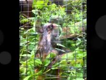 Zoo d'Amiens en vidéo