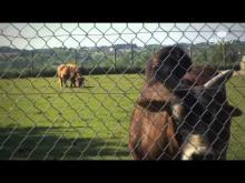 Zoo de la Pommeraie - Parc Animalier de Peumérit en vidéo