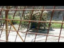 Parc animalier de Lussas en vidéo
