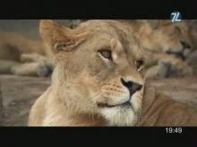 La Réserve Africaine de Sigean en vidéo