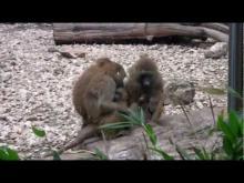 Muséum de Besançon - Le Jardin zoologique en vidéo