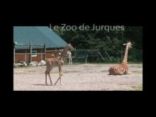 Zoo de Jurques en vidéo
