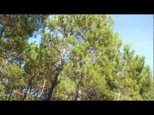 Vidéo de la Forêt de la Coubre