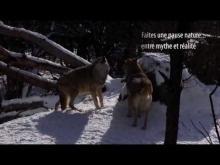 Parc à loups du Gévaudan en vidéo