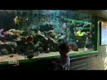 l'Aquarium de Noirmoutier en Vidéo