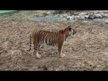 Safari de Peaugres en vidéo