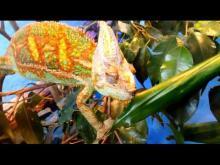 Aquarium de Canet-en-Roussillon en vidéo
