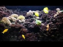 Muséum Aquarium de nancy en vidéo