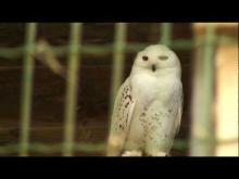 Rocher des Aigles en vidéo