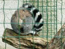 Parc animalier de la Haute Touche en vidéo