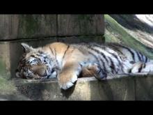 Zoo du Bassin d'Arcachon en vidéo