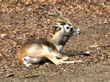 Réserve zoologique de Sauvage en vidéo