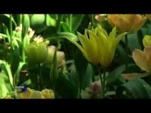 Parc Floral de la Court d'Aron en vidéo