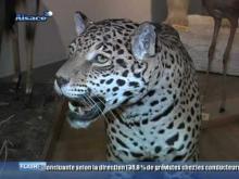 Musée Zoologique de Strasbourg en vidéo