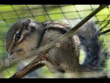Spaycific'Zoo en vidéo