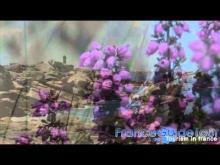Vidéo sur les Rochers de Ploumanac'h